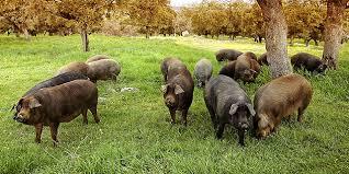 La carne de cerdo volverá a exportarse a Rusia