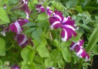 El Magrama celebra la reducción del tipo impositivo del IVA para flores y plantas ornamentales