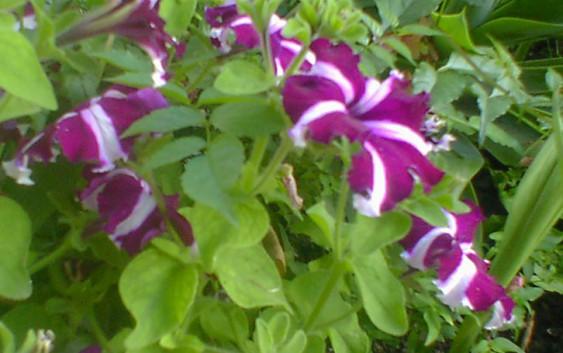 El magrama celebra la reducci n del tipo impositivo del for 20 plantas ornamentales