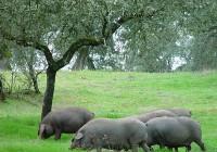 Cooperativas Agro-alimentarias de Andalucía se pone a disposición de la Consejería y el Magrama para demostrar la singularidad de las dehesas en Bruselas