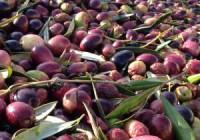 La agricultura andaluza representa el 60% del saldo positivo de la balanza comercial alimentaria española