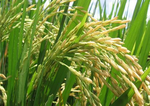 La Renta Agraria de Andalucía aumentó un 11,3% en 2014 y el valor de la producción rozó los 11.000 millones de euros
