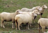 El precio en origen de la leche de oveja subió en junio hasta alcanzar los 0,945 euros/litro