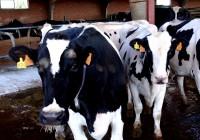 La UE pone fin este martes al régimen de las cuotas lácteas después de treinta años