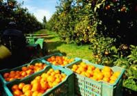 Abierto el plazo de ayudas para agricultores afectados por el veto ruso