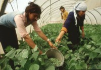 Día Internacional de la Mujer: Las organizaciones de mujeres rurales piden medidas para acabar con las diferencias de género en la actividad agraria