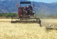 Aprobado el límite al uso de biocombustibles tradicionales