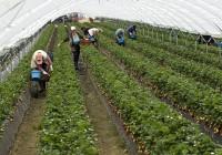Sube el paro agrícola en 9.700 personas