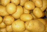 El sector de la patata cae un 35% en 25 años