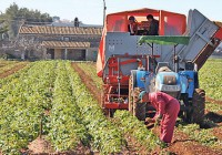 El campo andaluz se ahorra 380 millones en IRPF con la rebaja fiscal