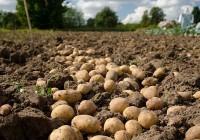 UPA propone la creación de una Interprofesional para incentivar el consumo de la patata española