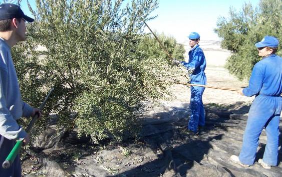 Asaja señala que el retraso de la Orden de Ayudas Agroambientales complica la campaña PAC
