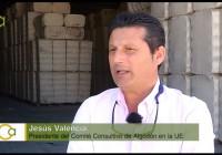 La siembra del algodón en el Bajo Guadalquivir