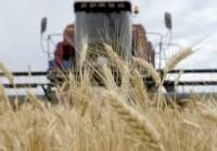 Rusia elimina los aranceles a sus exportaciones de trigo