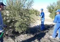 Andalucía financia con 44,31 millones de euros el Programa de Fomento de Empleo Agrario