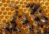 Las altas temperaturas reducen un 70 % la producción de miel