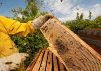 """COAG rechaza la línea agroambiental que """"desprecia al sector apícola"""""""
