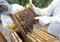 COAG movilizará a cientos de apicultores en protesta contra la agroambiental