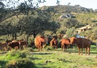 El sector del vacuno pide a Tejerina un esfuerzo en las exportaciones