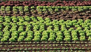 Los miembros de la UE intentarán cerrar acuerdo sobre las normas de la agricultura ecológica