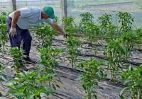 Las exportaciones hortofrutícolas crecen el primer trimestre un 7,5%