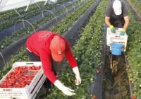 Retos y soluciones par la agricultura de 2050