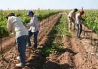 El paro agrícola vuelve a bajar un 3,52% durante el segundo trimestre del año