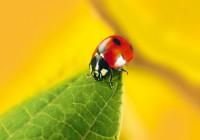 Jornada: Avances en control biológico en pepino y tomate