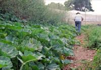 """La UE no aplicará al final la """"tolerancia cero"""" para los pesticidas en los alimentos orgánicos"""