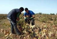 Se incrementan las subvenciones para la contratación del seguro del olivar