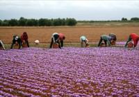 Elena Víboras tranquiliza a los jóvenes agricultores andaluces