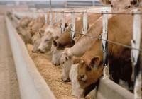 Para cobrar las ayudas lácteas se debe haber vendido leche cuatro meses sin rentabilidad