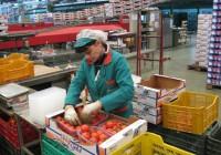 La Junta otorga 56 millones para las Organizaciones de Productores de Frutas y Hortalizas