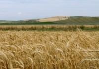 Comienza la campaña de cereales de invierno marcada por la sequía