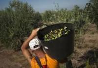 El paro agrícola vuelve a bajar por tercer mes consecutivo