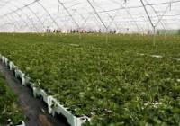 """Jornada """"Nuevos retos de la gestión fitosanitaria en la producción de planta de vivero"""""""