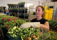 El sector ve en la gran distribución el revulsivo para la venta de flores y plantas