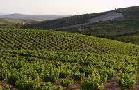 Tres millones en ayudas para la reestructuración y reconversión de 456 hectáreas de viñedo