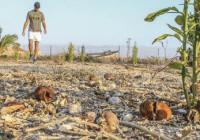 Alerta por la reducción de algunos cultivos debido a las altas temperaturas