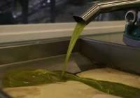 Final de la campaña oleícola marcada por la baja producción