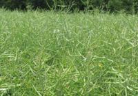 El Seguro para Cultivos Herbáceos Extensivos amplía la cobertura