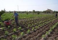 Carmen Ortíz prevé un incremento del 20% de la superficie ecológica andaluza en 2015