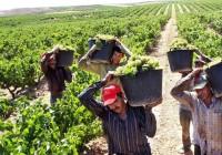 La vendimia española avanza en un momento de mejoría para el mercado del vino