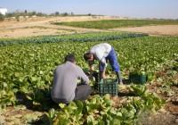 El 43% de los solicitantes de la PAC andaluces están en el régimen de pequeños agricultores