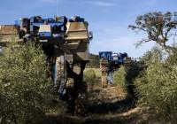 Unos 2.000 agricultores en Sevilla se quedan sin el anticipo de la PAC