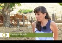 El relevo generacional en el agro andaluz