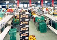 Crece un 10% la exportación hortofrutícola española a la UE
