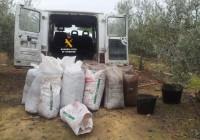 Detienen a 7 personas por el robo de 30.000 kilos de aceitunas en Huelva
