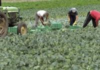 El paro agrario sube casi el doble de lo que lo hizo en septiembre