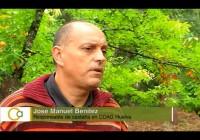 VÍDEO: La recolección de la castaña de Huelva